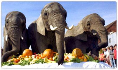 Elefantenhof Parchim